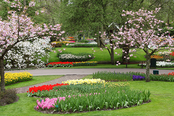 Gardening tips for plant killers
