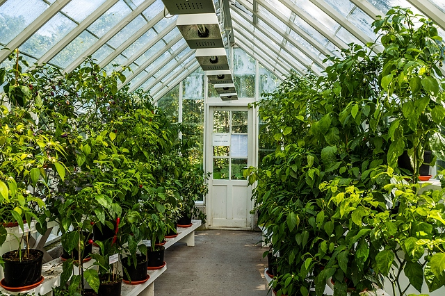 Top-rated greenhouses